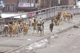 Dog-bite cases down by 35 percent in Srinagar