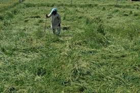 Official from center visits Rajouri to look into farmers problems