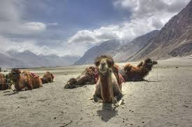 nubra-valley-now-open-to-foreign-tourists